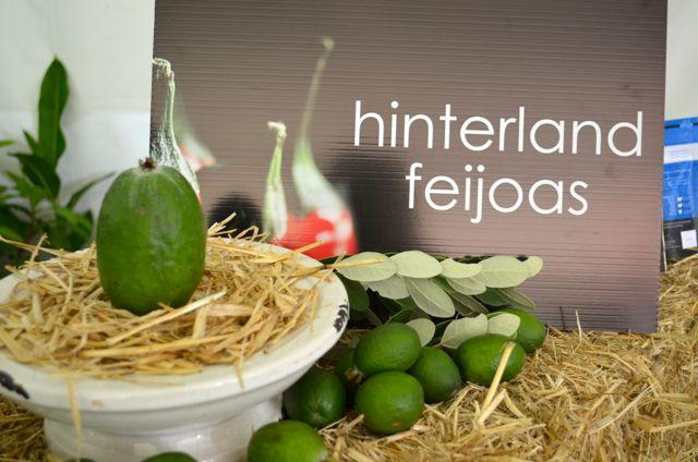 Hinterland Feijoa - Sunshine Coast1