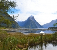 new-zealand-miss-foodie14